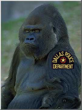 The Worst Things That Have Ever Happened at Zoos (Page 3) |Jabari Gorilla Dallas Zoo